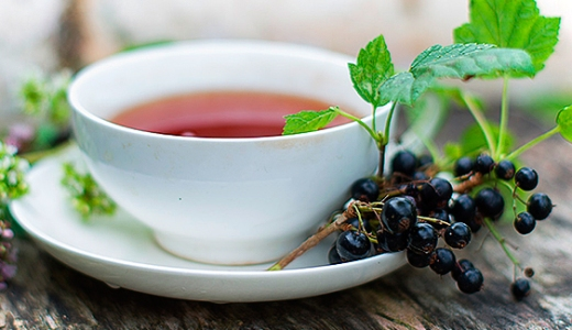 Ivan Tea leaf  with  black currant leaves