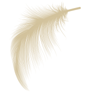 feather-bottom-right2